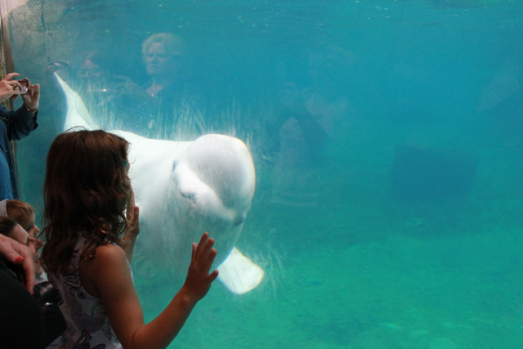 Maura admiring a sea creature at Mystic Aquarium.